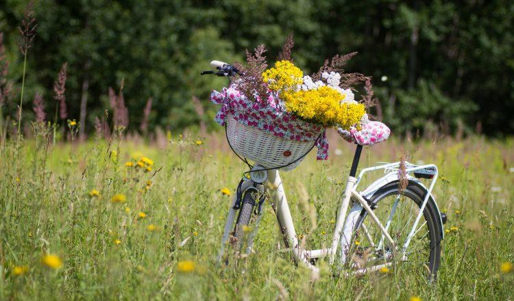Radfahren Insel Rügen
